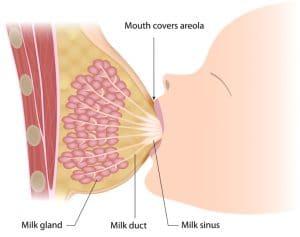 Поставяне и отделяне от гърдата