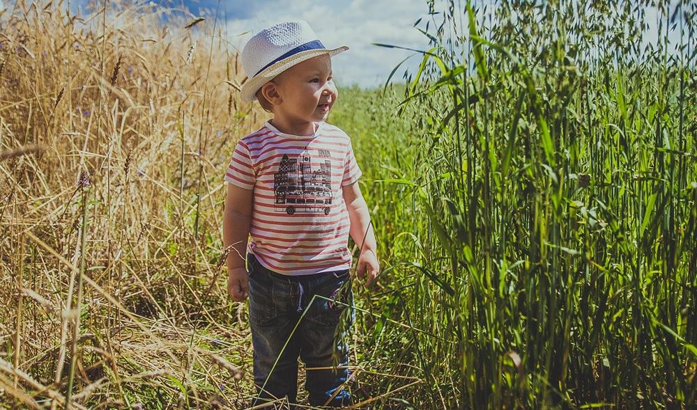 Въвеждане на пшеница и глутен